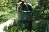 Unos 6 mil trabajadores temporarios de la pera y manzana accedieron al subsidio Interzafra