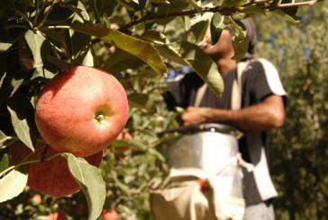 Reconocimiento a Trabajadores de la Fruta