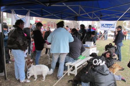 Importante participación de las ACTIVIDADES CANINAS en Roca