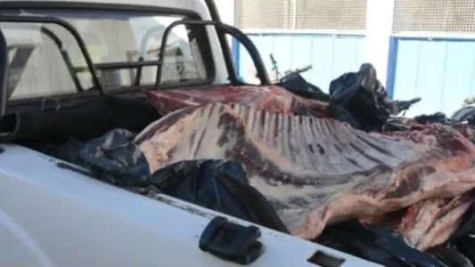 Llevaba unos mil kilos de carne en la caja de una camioneta